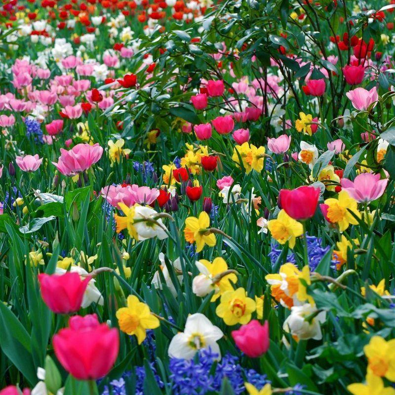 10 Best Free Spring Desktop Wallpaper Full Hd 1920 1080 For Pc Desktop 2018 Free Downlo Spring Flowers Wallpaper Spring Desktop Wallpaper Summer Flowers Garden