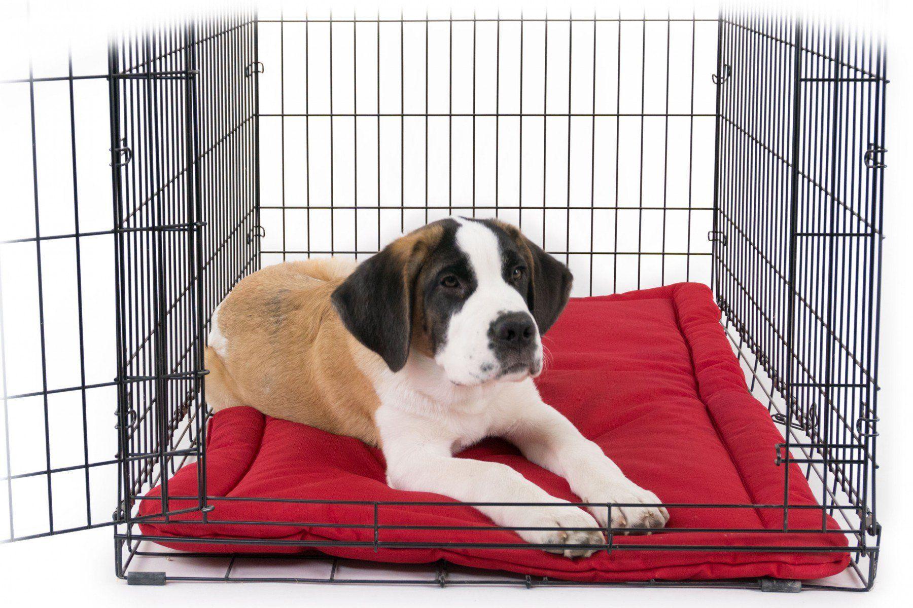 K9 Ballistics TUFF crate pad 50 Dog crate pads, Puppy