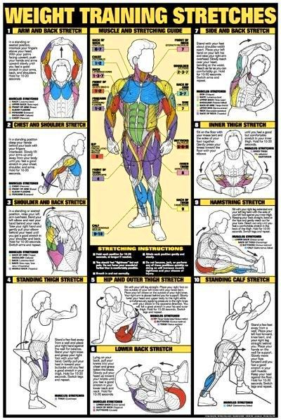 Bodybuilding Workout Diagrams