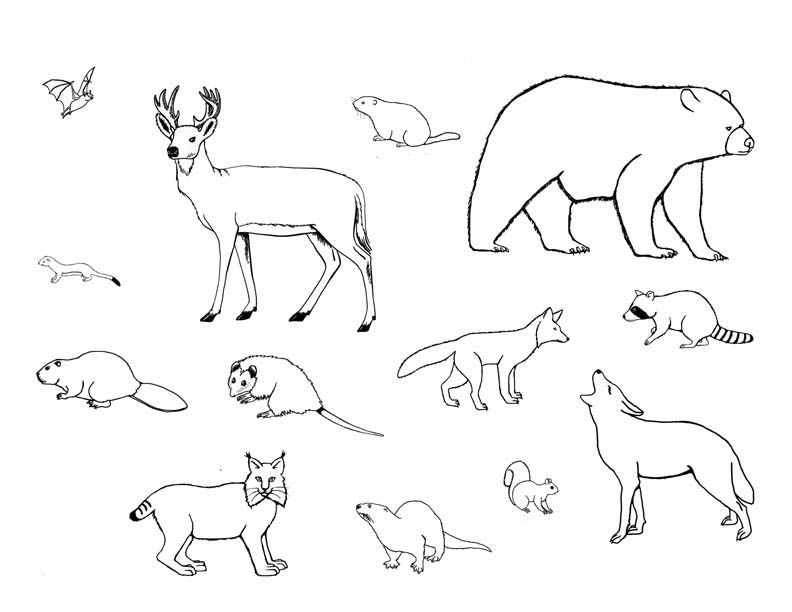 animal references for Drawing | Descarga e imprime estos mamiferos ...