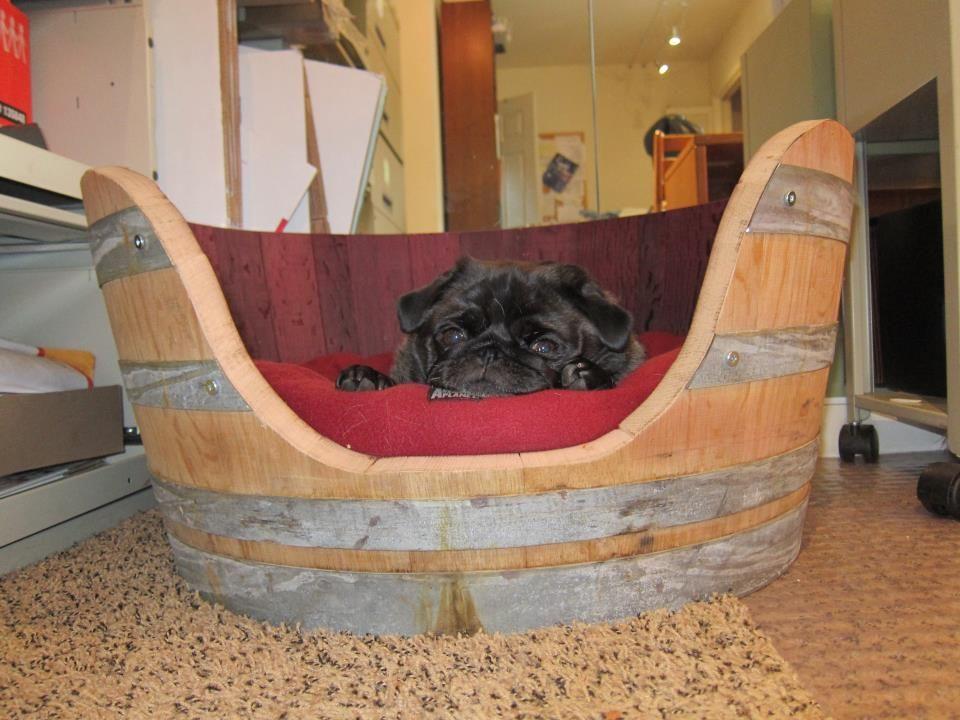Download Pug Canine Adorable Dog - 31813a9a83793dc0b21c829fab27ed9d  Snapshot_621746  .jpg