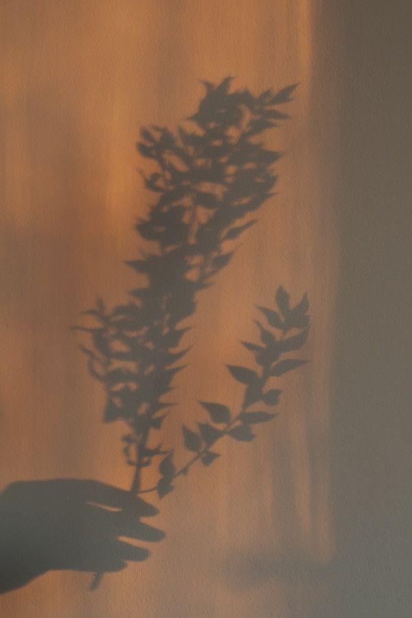 Free Stock Photo: SHADOWS BACKGROUND - Kaboompics
