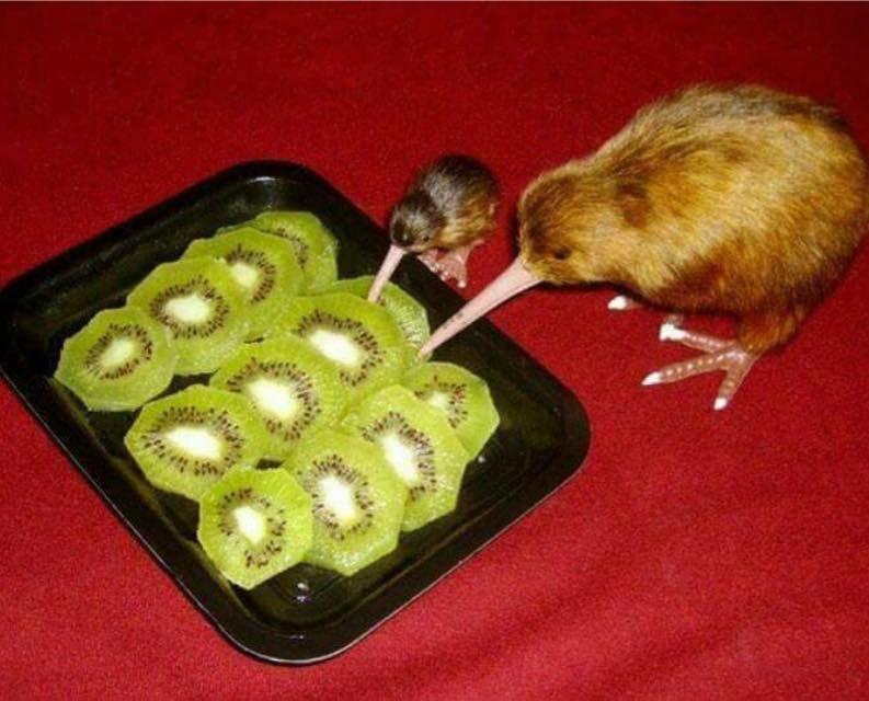 Li vuoi quei kiwi?