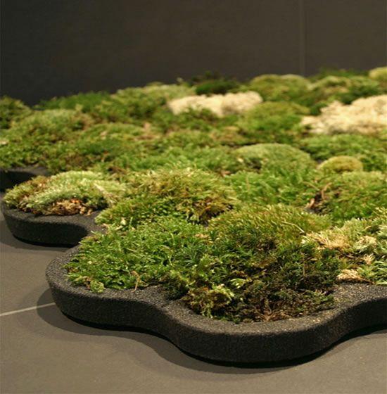 Eco Friendly Rugs Ideas