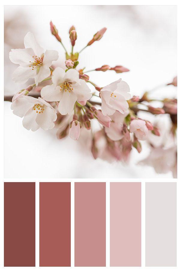 Cherry Blossom Color Palette Flower Inspired Color Scheme Color Schemes Colour Palettes Color Schemes Color Palette Design