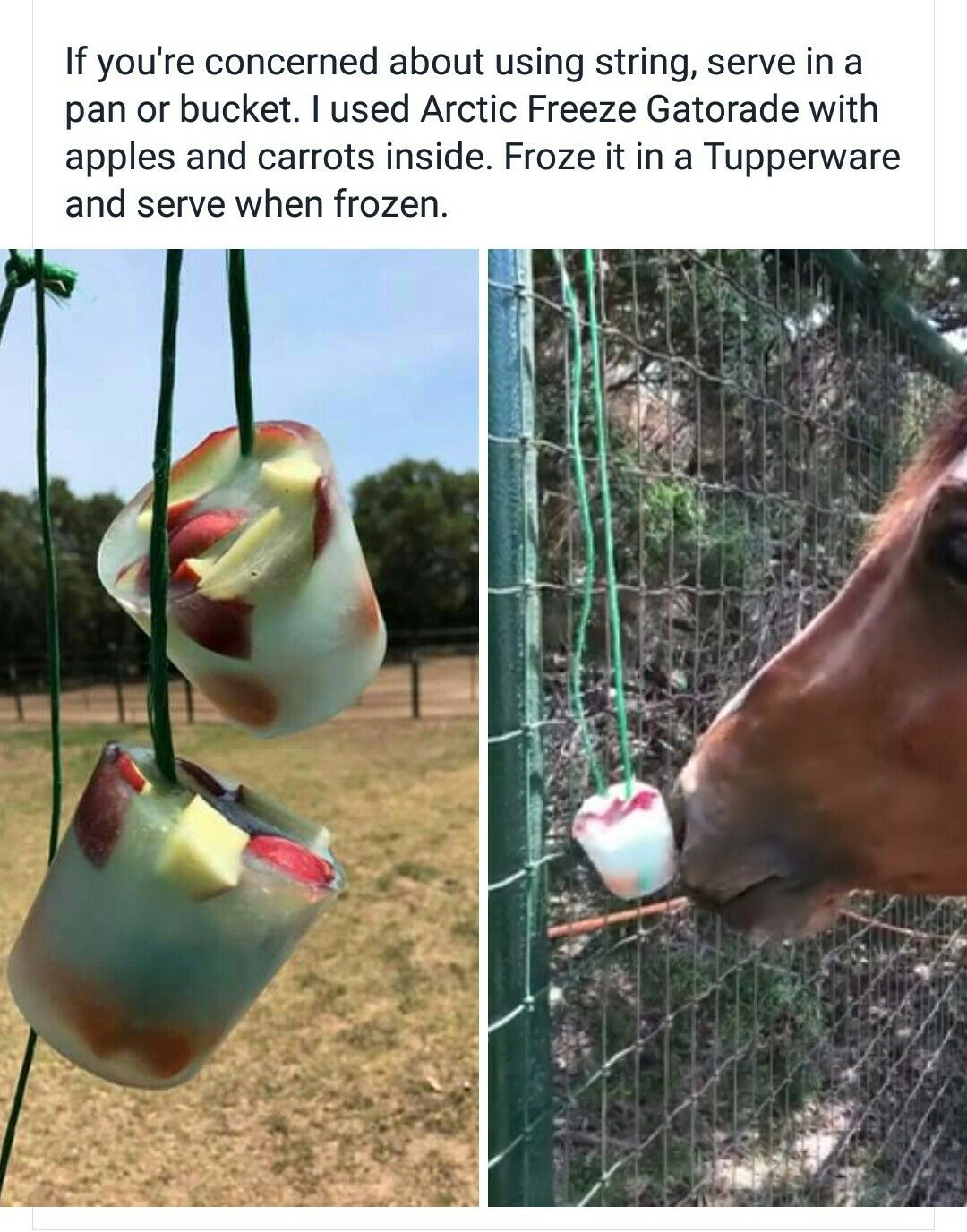 c860a5b835 Horse popsicle. Gatorade