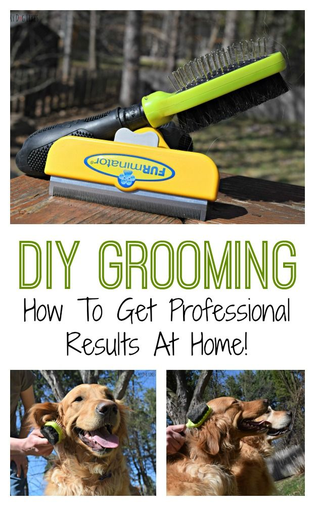 Looking to get professional grooming results at home? Check out the @FURminator® brushes that @MyDogLikes loves and uses from @Chewy.com . You can get great results at a fraction of the cost of the groomer!