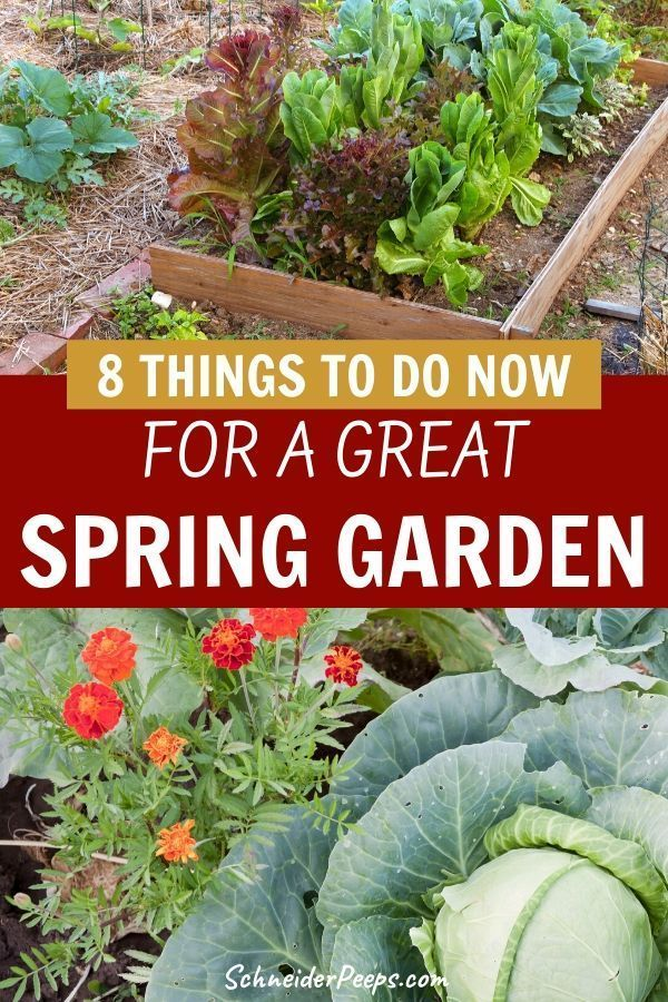 Planning the spring garden begins well before spring. Even if your garden is covered in snow you can do these 8 simple things now so that you'll be growing fruits and vegetables in the spring instead of trying to play catch up. Learn what things you can do now in this step by step guide. #GrowingFood #GardenIdeas #Homesteading #GardenPlanning