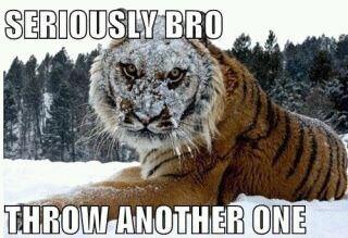 Funny Memes On Tumblr : Funny animal memes tumblr image memes at relatably.com funny