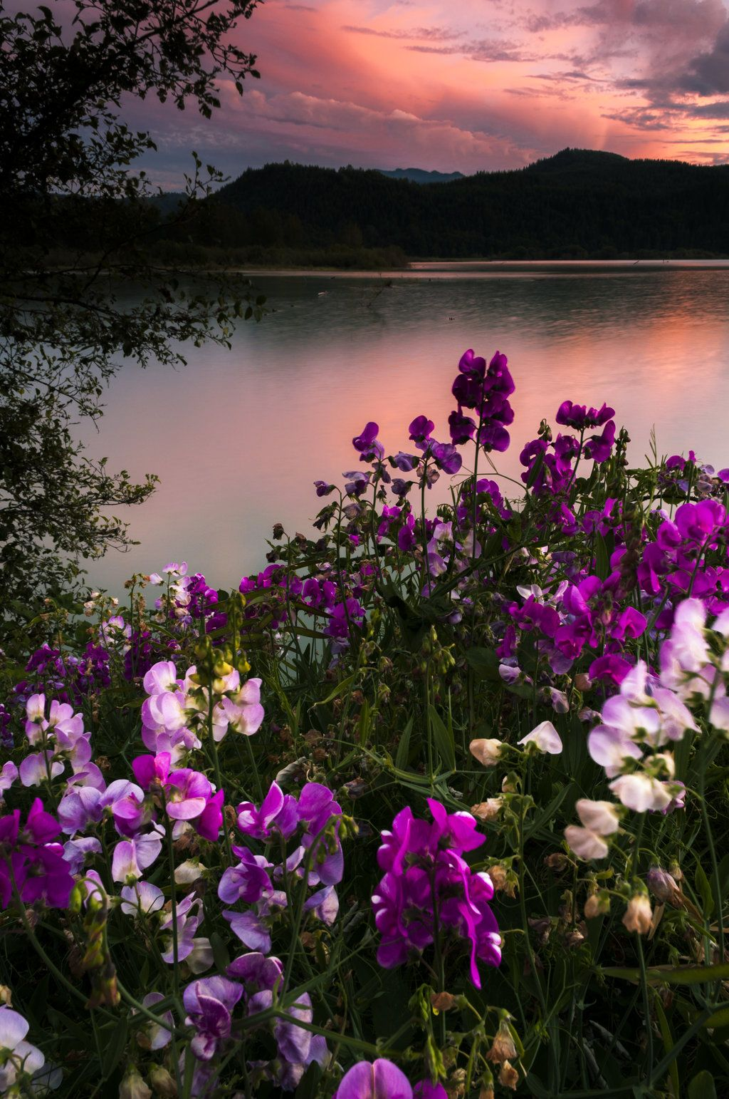 Foxglove And Fire Beautiful Landscapes Beautiful Nature Nature Photography