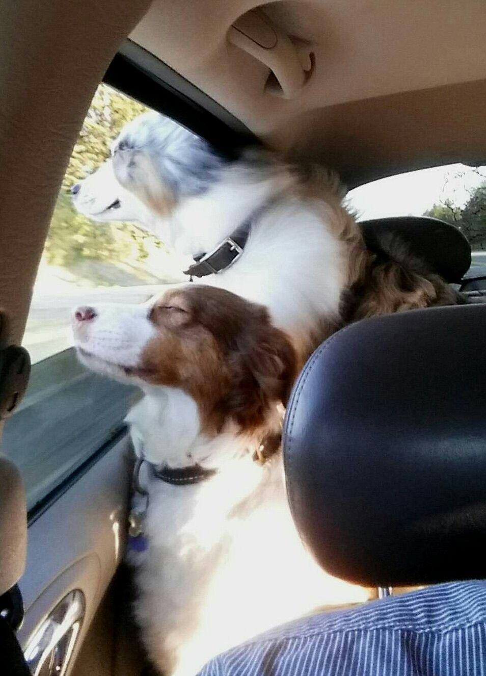Park Art|My WordPress Blog_Samoyed Puppies For Sale Sacramento Ca