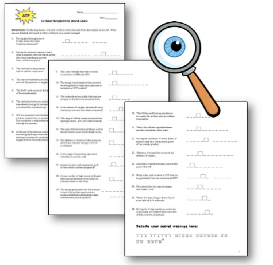 worksheet Respiration Review Worksheet blog post from science stuff free cellular respiration review worksheet