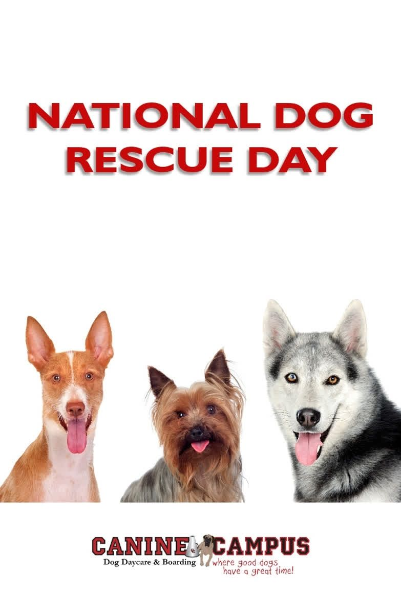 May 20th is National Dog Rescue Day. Tell us about your
