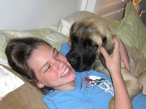 Fluffy Mastiffs A Group For Fluffy Long Haired Mastiffs Only Long Hair Styles Dog Kisses Mastiffs