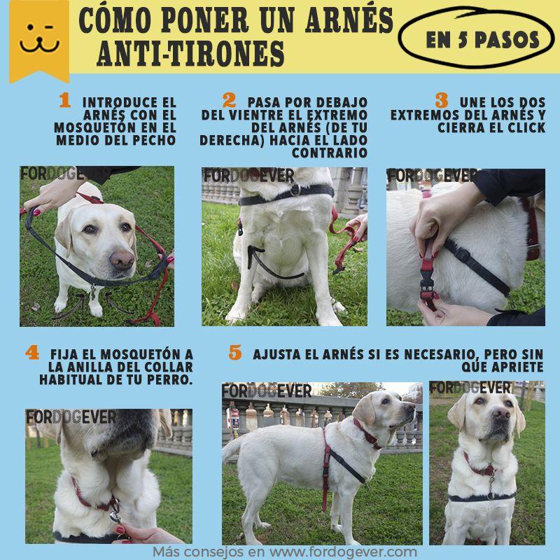 Tipos De Collares De Castigo Para Perros 5 Pasos Para Colocar Correctamente A Tu Perro El Arnes Halti Anti