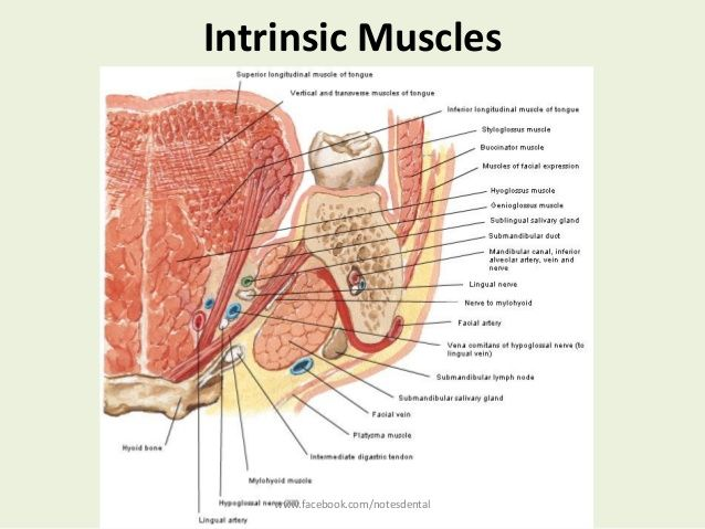 Intrinsic Muscles Facebooknotesdental Slp Anatomy