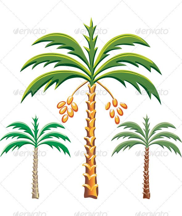 Vector three date palm trees   #GraphicRiver         Set of the date palm trees, Various color options.            Other landscapes and nature images for you:           Created: 29August11 GraphicsFilesIncluded: JPGImage #VectorEPS Layered: Yes MinimumAdobeCSVersion: CS Tags: brown #date #drawing #foliage #green #illustration #leaves #nature #palm #plant #three #tree #tropical #vector #yellow