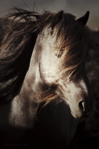 Horses II - GIA PHOTOGRAPHY