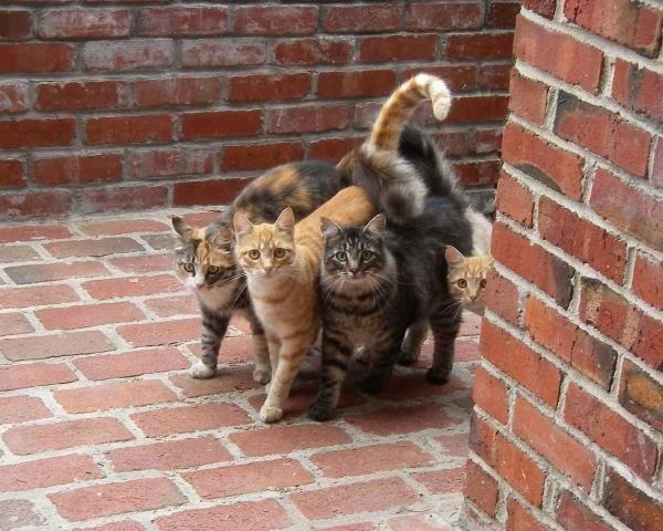 street gang とにかくこの人らはギュウギュウが大好き