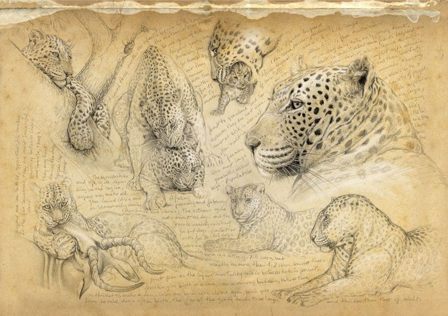 Line Drawings Of African Animals : Oo marcello pettineo oou003c sketches pinterest drawings