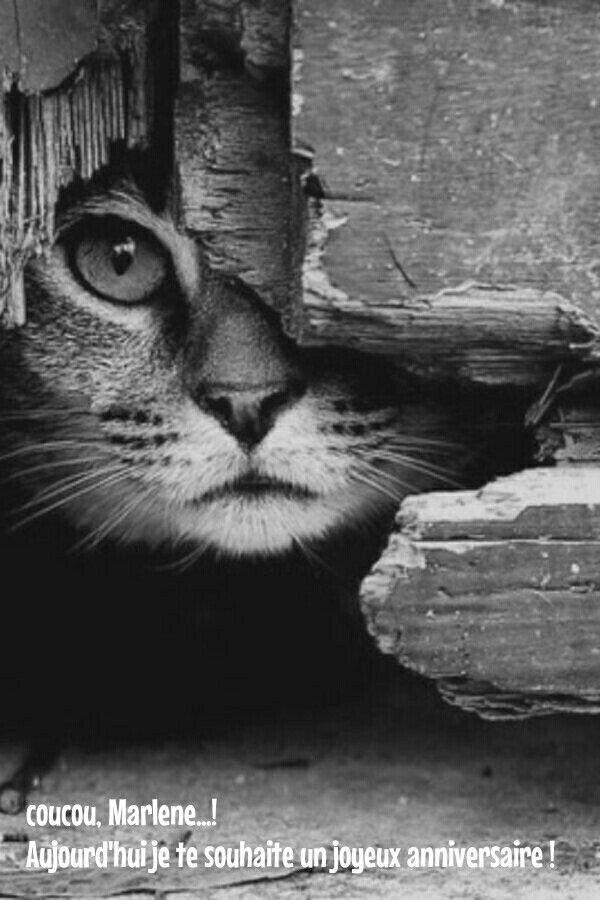 Epingle Par Agnes Doy Sur Anniversaire Chat Noir Et Blanc Photographie Noir Et Blanc Noir Et Blanc