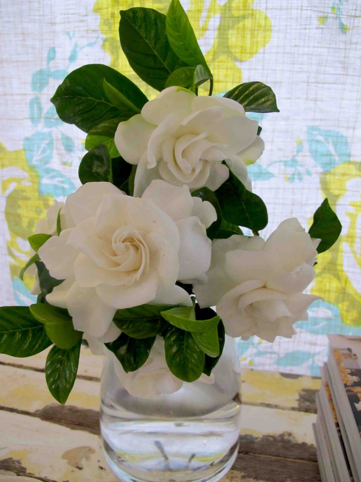 Gardenias I Love How They Smell With Images Beautiful Flower Arrangements Gardenia Bouquet Beautiful Flowers