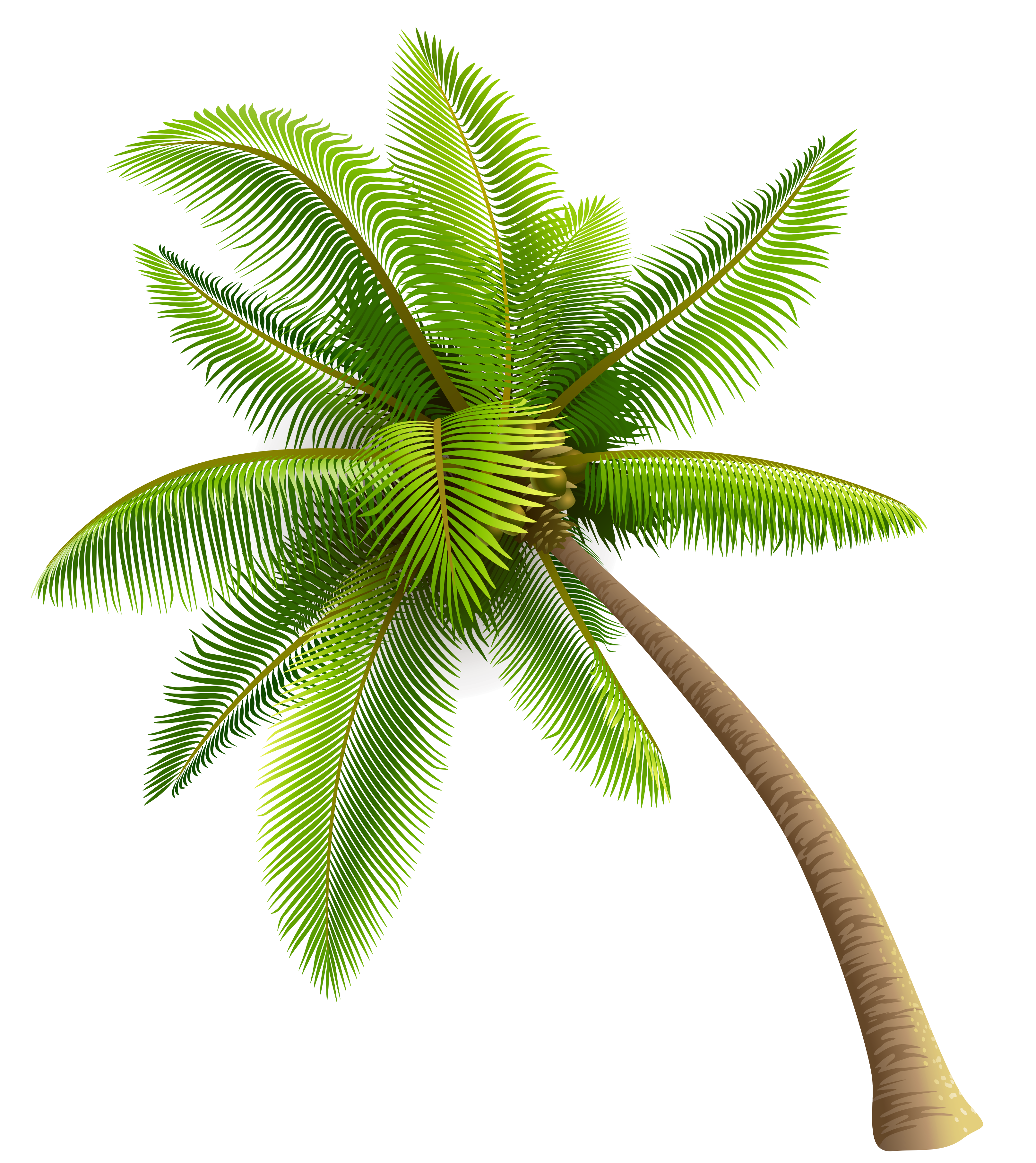 Green Palm Tree PNG Clipart | Gallery Yopriceville - High-Quality ...