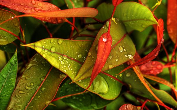 Full Hd Wallpaper Dew Droplets Leafs Nature Seasons Spring By Jonathon Deans Water Drop On Leaf Green Leaf Wallpaper Leaf Wallpaper