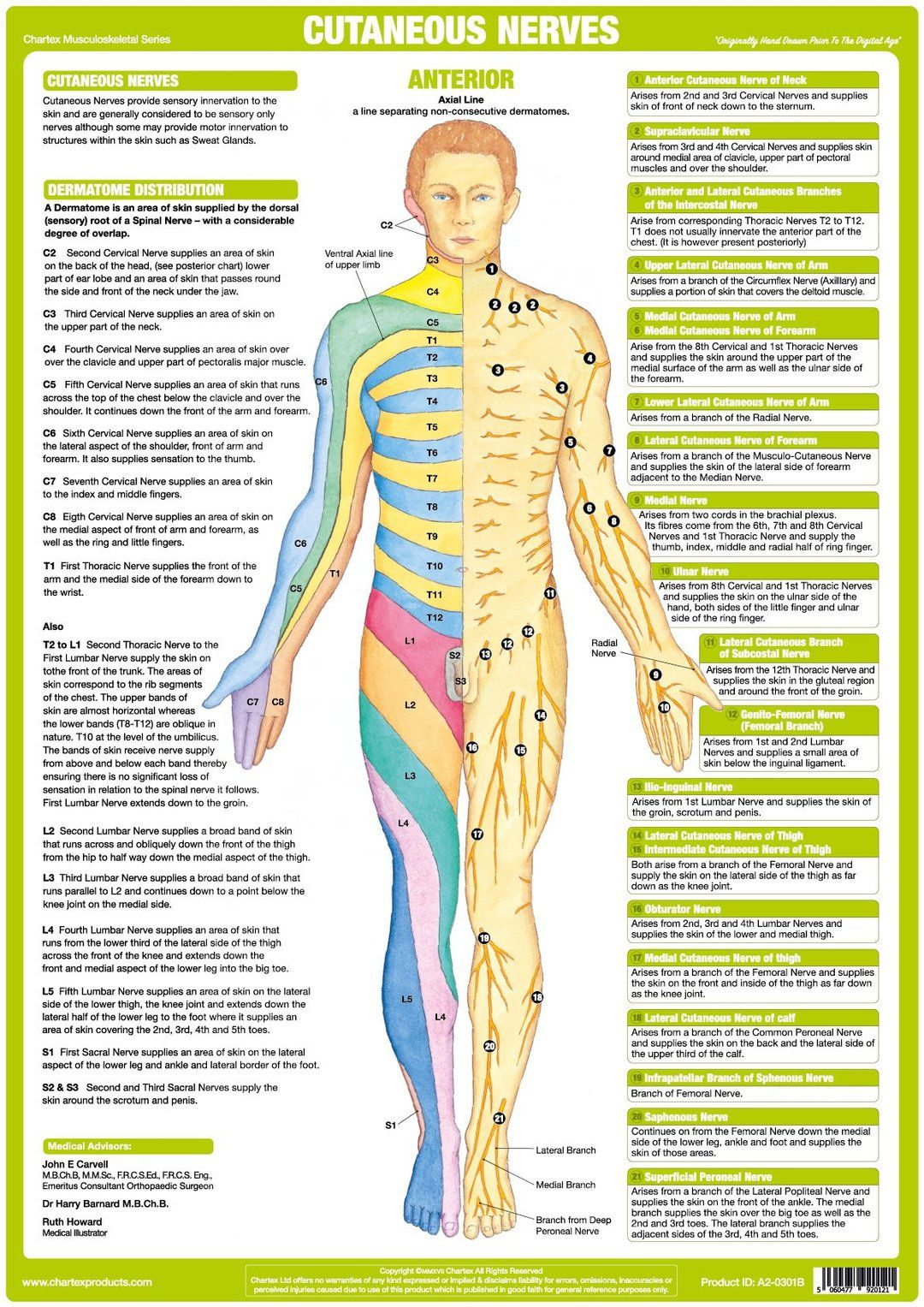 small resolution of unique set of 6 charts illustrating explaining the human nervous system showing major nerves of the upper limb lower limb the origin of cutaneous
