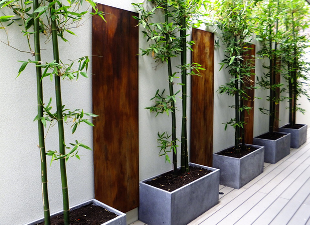 Green Bamboo In Grey Containers Great For Privacy Shade From A
