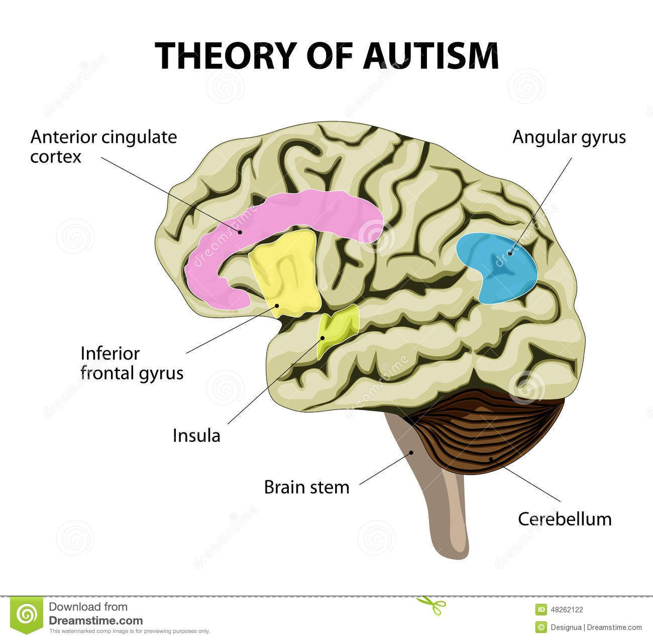 theory-autism-human-brain-mirror-neurons-illustration-show-specific ...
