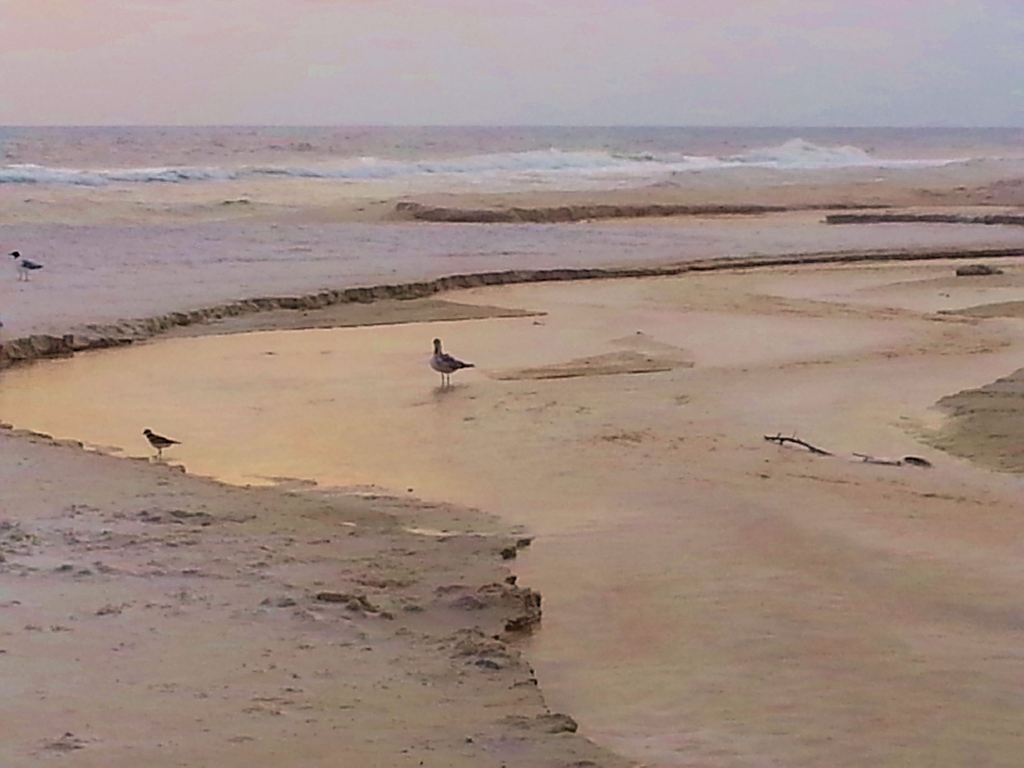 5 9 14 T Laguna Beach On The Gulf Of Mexico Panama City Beach Florida Panama City Panama Panama City Beach City Beach