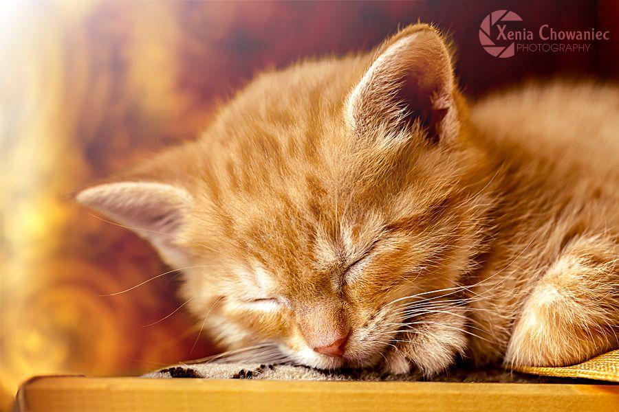 Sleepy Kitty Ginger by XeniaChowaniec.deviantart.com on @DeviantArt