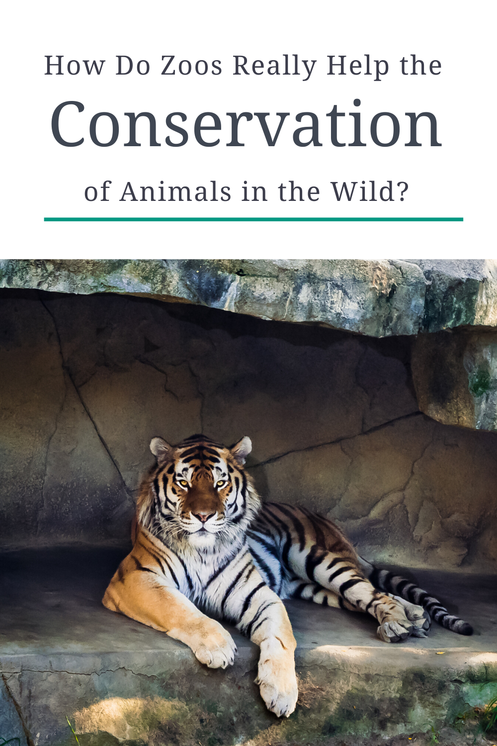 Do Zoos Really Help The Conservation Of Animals In The Wild Wildlife Conservation Projects Animal Conservation Animals Wild