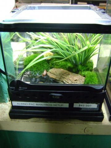 Example Of An Ideal Pacman Frog Tank Terrariums Cages Frog
