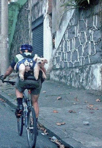 viajante de bike com bicho...