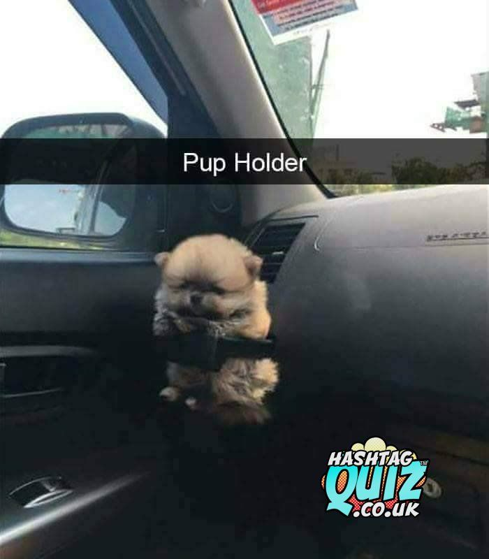 Hashtag Quiz On Animals Funny Animals Easiest Dogs To Train