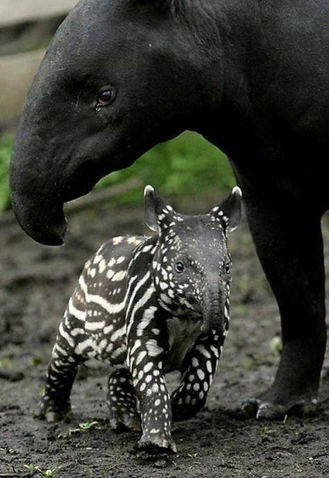50 Eltern aus dem Tierreich und ihre entzückenden Kinder - Kelly Blog #wildanimals