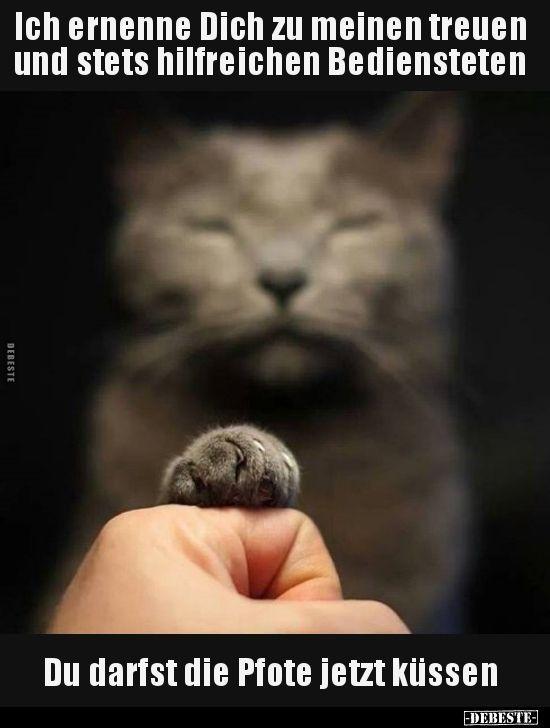 STOP! Du liebst Katzen? Bei uns von EBENBLATT gibt's die besten T-Shirts für Katzenfans! #katze #katzen #lustig #shirt #tshirt