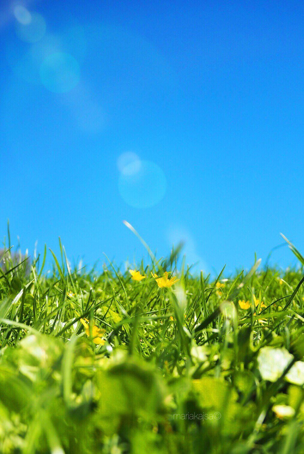 iPhone and Android Wallpapers Grass and Blue Sky