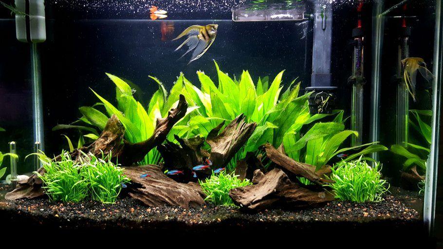29 Gallon Community Tank Cool Fish Tank Decorations Tropical Fish Tanks Angel Fish Tank