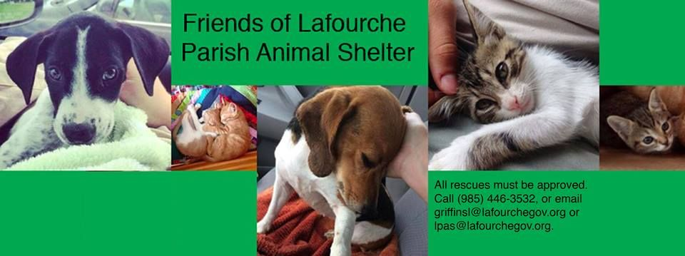 13+ Lafourche parish animal shelter ideas