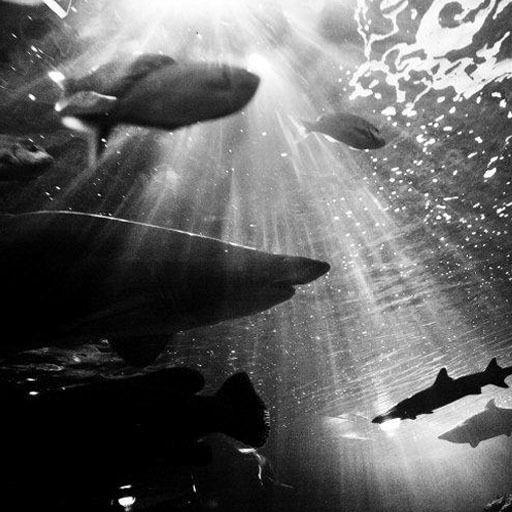 Underwater In Sydney, Australia