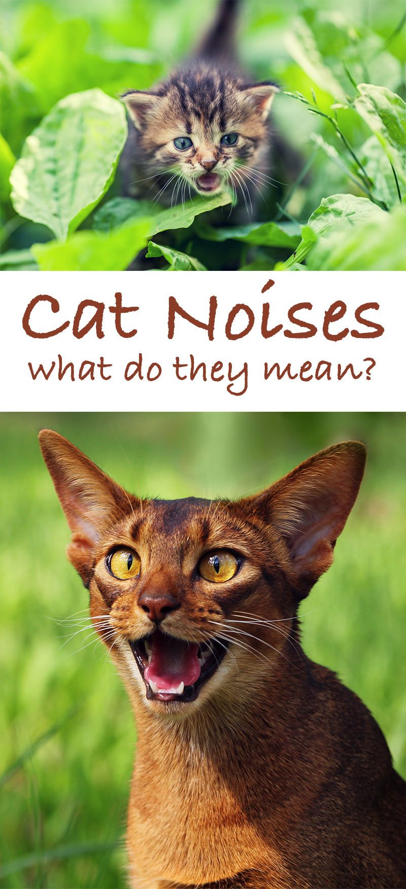 Kitty Sounds A Complete Guide To Cat Noises And Their