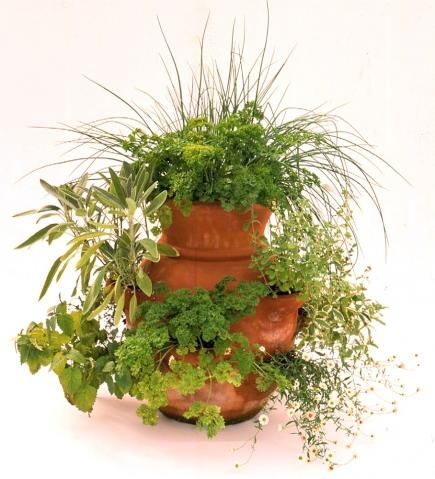 Enjoy a Vegetable Container Garden | Midwest Living