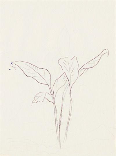 orchidetelm