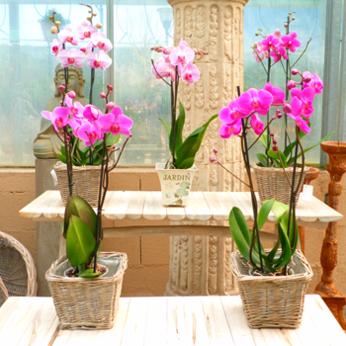 Tipos de macetas para el cultivo de orqu deas ideas para - Ideas para decorar jardines ...