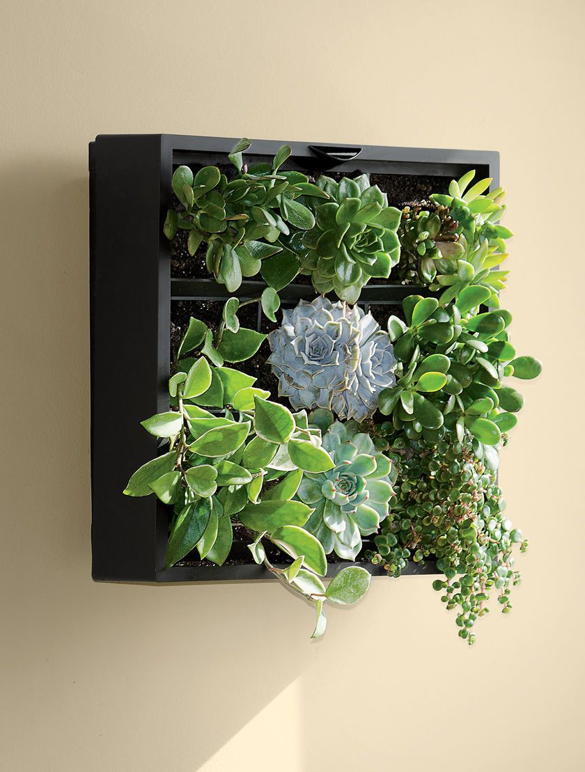 Living Wall Planter | Green Wall | Vertical Garden | Gardeneru0027s Supply