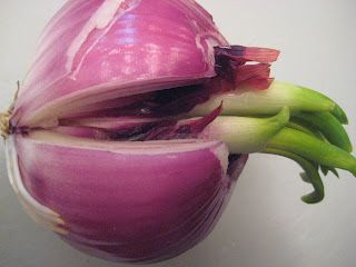 Growing Sprouted Onions With Images