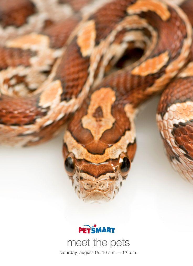 Reptile Care Guides Reptile Care Pets Animals